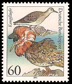 60 Pf Briefmarke: Wasser- /Seevögel