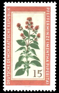 15 Pf Briefmarke: Therapeutische Arzneipflanzen, Pfefferminze