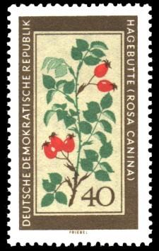 40 Pf Briefmarke: Therapeutische Arzneipflanzen, Hagebutte