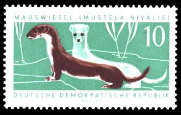 10 Pf Briefmarke: Nützliche geschützte Tiere, Mauswiesel