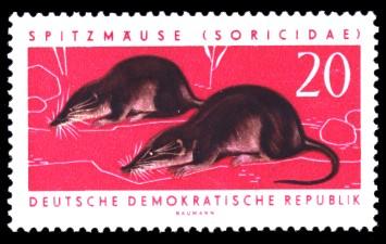 20 Pf Briefmarke: Nützliche geschützte Tiere, Spitzmaus