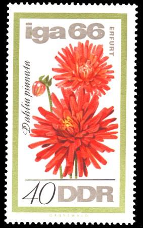 40 Pf Briefmarke: IGA 66, Dahlie