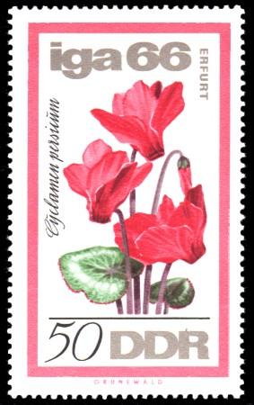 50 Pf Briefmarke: IGA 66, Alpenveilchen