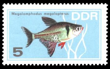 5 Pf Briefmarke: Zierfische, Megalamphodus megalopterus