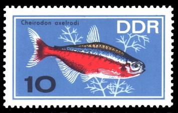 10 Pf Briefmarke: Zierfische, Cheirodon axelrodi