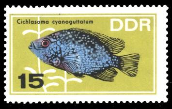 15 Pf Briefmarke: Zierfische, Cichlasoma cyanoguttatum