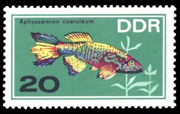 20 Pf Briefmarke: Zierfische, Aphyosemion coeruleum