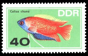 40 Pf Briefmarke: Zierfische, Colisa chuna
