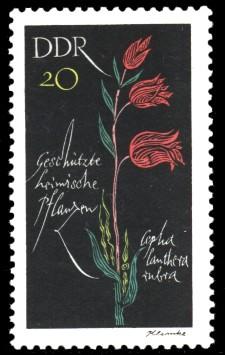 20 Pf Briefmarke: Geschützte heimische Pflanzen, Waldvögelein