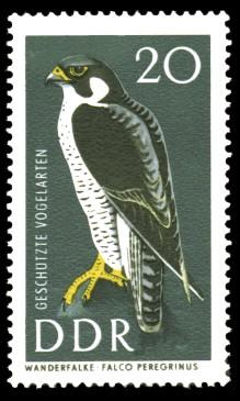 20 Pf Briefmarke: Geschützte Vogelarten, Wanderfalke