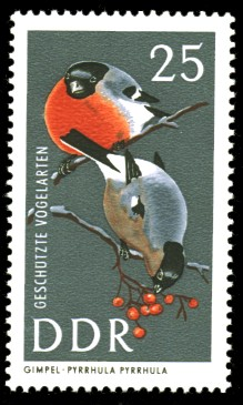 25 Pf Briefmarke: Geschützte Vogelarten, Gimpel