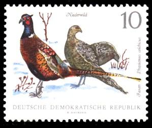 10 Pf Briefmarke: Niederwild, Fasan