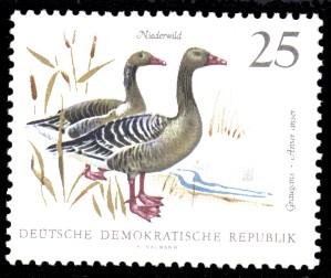 25 Pf Briefmarke: Niederwild, Graugans