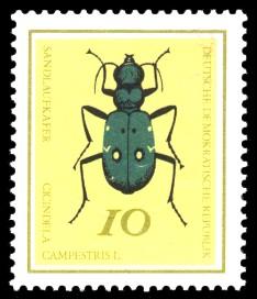 10 Pf Briefmarke: Nützliche Käfer, Sandlaufkäfer