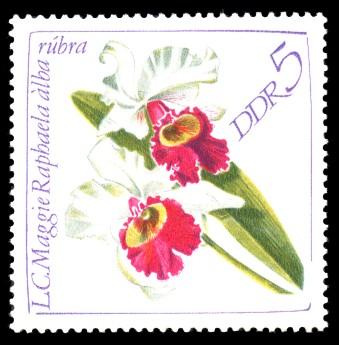 5 Pf Briefmarke: Orchideen