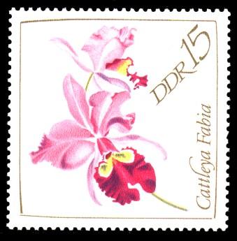 15 Pf Briefmarke: Orchideen