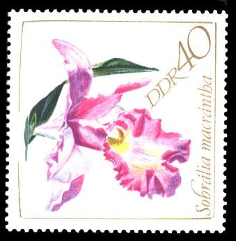 40 Pf Briefmarke: Orchideen
