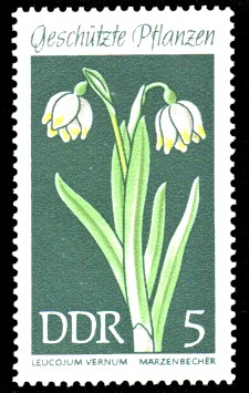 5 Pf Briefmarke: Geschützte Pflanzen, Märzenbecher