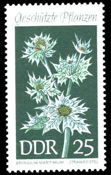 25 Pf Briefmarke: Geschützte Pflanzen, Stranddistel