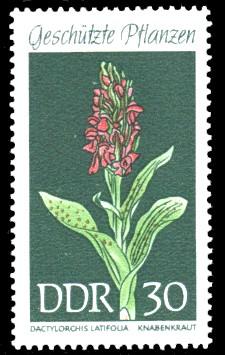 30 Pf Briefmarke: Geschützte Pflanzen, Knabenkraut