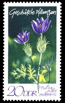 20 Pf Briefmarke: Geschützte Pflanzen, Kuhschelle