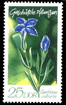 25 Pf Briefmarke: Geschützte Pflanzen, Fransenenzian