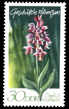 30 Pf Briefmarke: Geschützte Pflanzen, Helmknabenkraut
