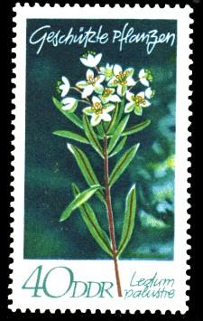 40 Pf Briefmarke: Geschützte Pflanzen, Sumpfporst