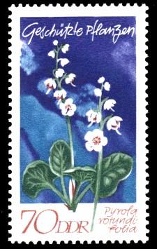 70 Pf Briefmarke: Geschützte Pflanzen, Rundblättrige Wintergrün