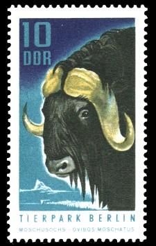 10 Pf Briefmarke: Tierpark Berlin, Moschusochse