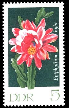 5 Pf Briefmarke: Kakteen, Blattkaktus
