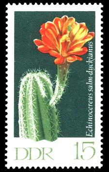 15 Pf Briefmarke: Kakteen, Igelsäulenkaktus