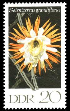 20 Pf Briefmarke: Kakteen, Königin der Nacht