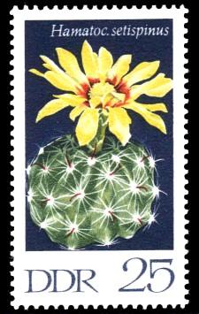 25 Pf Briefmarke: Kakteen, Hakenstachelkaktus