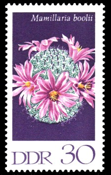 30 Pf Briefmarke: Kakteen, Warzenkaktus