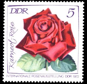 5 Pf Briefmarke: Internationale Rosenausstellung, Karneol-Rose