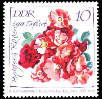 10 Pf Briefmarke: Internationale Rosenausstellung, Bergers Rose