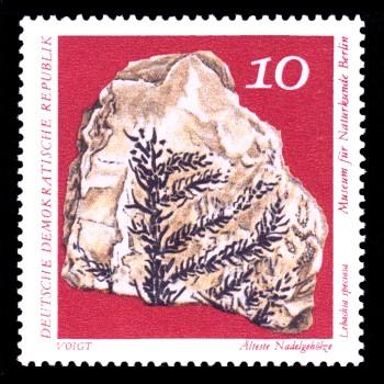 10 Pf Briefmarke: Paläontologische Sammlungen aus dem Museum für Naturkunde in Berlin