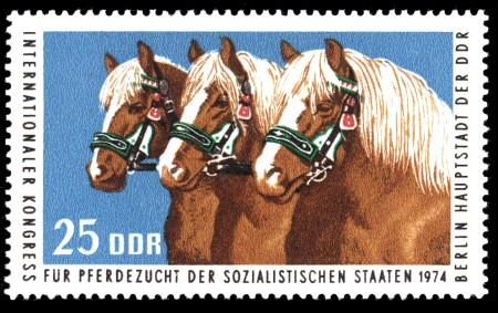 25 Pf Briefmarke: Kongreß für Pferdezucht, Haflinger