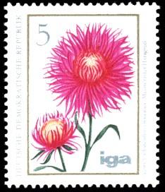 5 Pf Briefmarke: iga Blumenzüchtungen, Aster