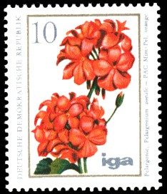 10 Pf Briefmarke: iga Blumenzüchtungen, Pelargonie