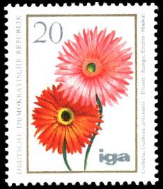 20 Pf Briefmarke: iga Blumenzüchtungen, Gerbera