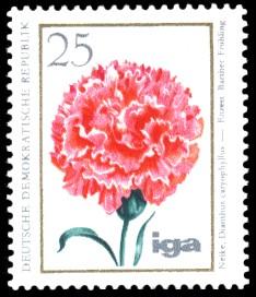 25 Pf Briefmarke: iga Blumenzüchtungen, Nelke