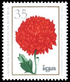 35 Pf Briefmarke: iga Blumenzüchtungen, Chrysantheme