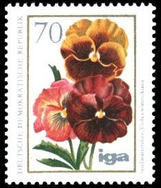 70 Pf Briefmarke: iga Blumenzüchtungen, Stiefmütterchen
