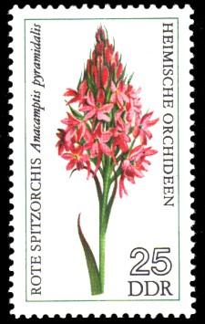 25 Pf Briefmarke: Heimische Orchideen, Rote Spitzorchis