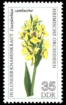 35 Pf Briefmarke: Heimische Orchideen, Holunder Knabenkraut