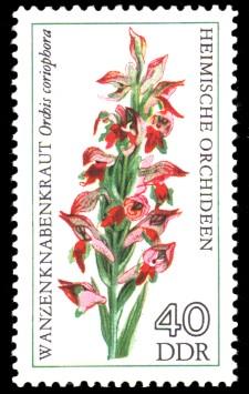 40 Pf Briefmarke: Heimische Orchideen, Wanzenknabenkraut