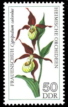 50 Pf Briefmarke: Heimische Orchideen, Frauenschuh