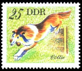 25 Pf Briefmarke: Hunde, Hunderassen, Collie